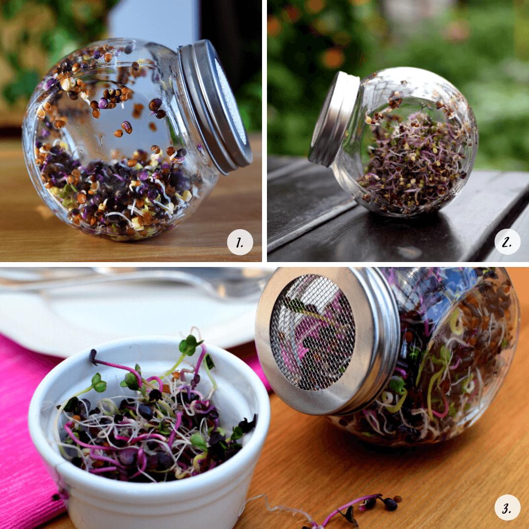 ¿Cómo usar un brote de jarra?