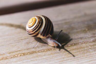 La idea de la vida lenta y la comida lenta.