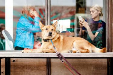 Perros en restaurantes, ¿es una buena idea?