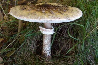 Prueba: ¿Qué es este hongo?  ¿Reconoces estos hongos?