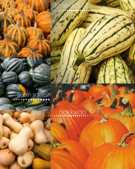 Tipos de calabaza comestible - infografía